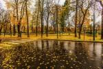 Gele regen