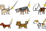 Gele strik voor probleemhond