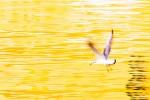 Meeuw boven geel water