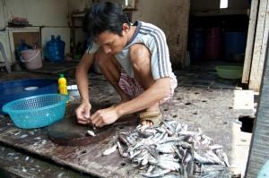 Vietnamese pangasiuskweker