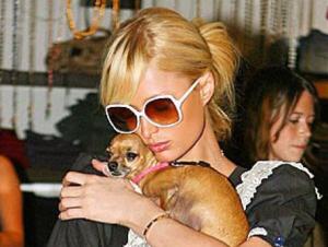 Paris Hilton en de Dode van de Week (foto: instagram/parishilton)